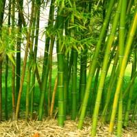 bamboo-garden-de